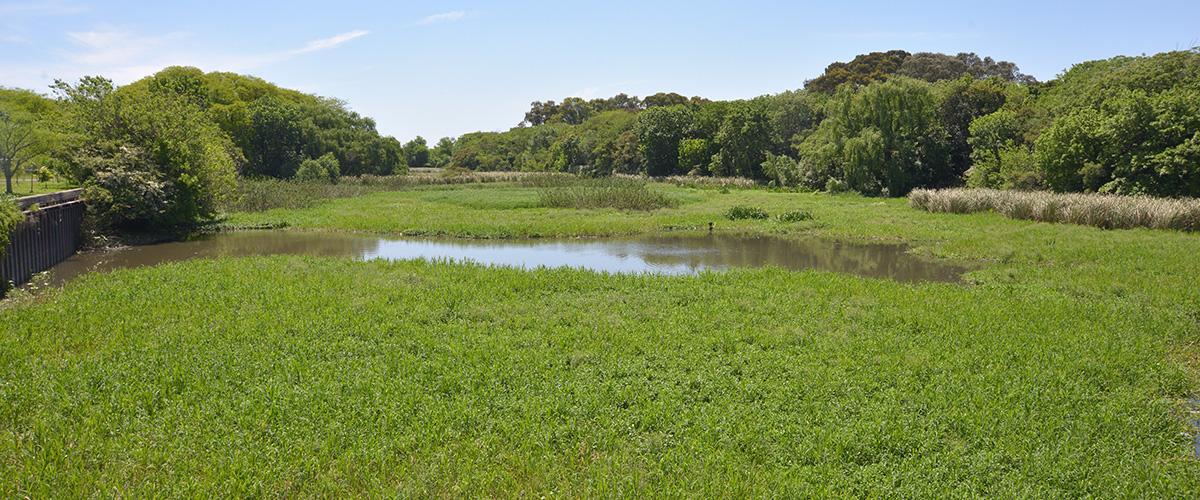 Visita a la reserva Ecológica